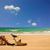 Beach with Carcass Royalty Free Stock Photography