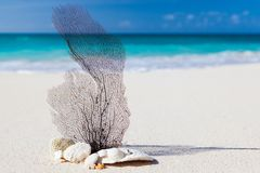 Beach, Caribbean, Blue, Beauty Stock Photos