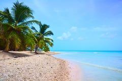 Beach of the Caribbean Sea. Tropical beach of the Caribbean Sea Stock Image
