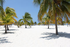 Beach on the Caribbean Sea, Cuba, Cayo Largo Stock Photos