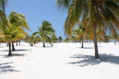 Beach on the Caribbean Sea, Cuba, Cayo Largo Stock Photos
