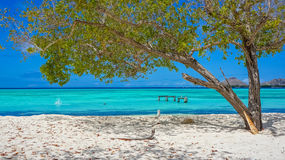 Beach in Caribbean with a tree. And leaves falling in the white sand stock image