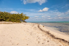 Beach on Cayman Islands Stock Images