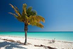 On the beach. Beach in Cayo Largo in Cuba Royalty Free Stock Photo