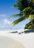 Beach chair under a palm tree on a hot afternoon Stock Image