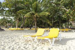 Beach chairs. A shot of yellow beach chairs on a tropical Resort Stock Image