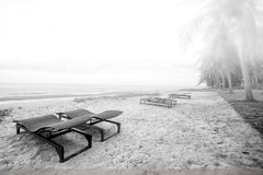 Beach Chairs. Black and white Sunbed on the beach  in the morning Royalty Free Stock Photo