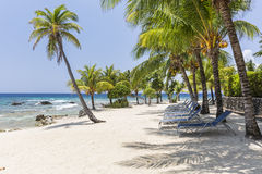 Beach Chairs on Lighthouse Point Beach. Coconut palm trees and beach chairs line the beautiful sandy beach at Lighthouse Point near the Meridian Resort in Roatan Stock Photos