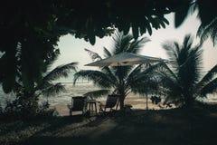 Silhouette palm Royalty Free Stock Photos
