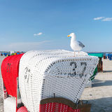 Beach chairs with seagull royalty free stock images