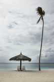 Beach chairs with umbrella and a lonely coconut tree Stock Photography