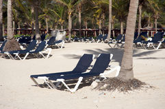 Beach chairs under palm trees Stock Images