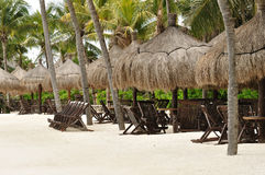 Beach Chairs under Palm Trees on Tropical Beach Stock Image