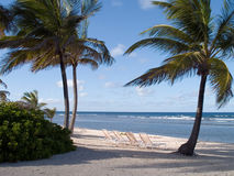 Beach Chairs Under Palms. Beach chairs at a sandy beach on a Caribbean Island Stock Photo