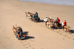 Beach Charioteers. Horse drawn buggies on the beach royalty free stock image