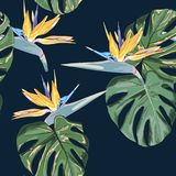 Beach cheerful seamless pattern wallpaper of tropical dark green leaves of palm trees and flowers bird of paradise strelitzia Royalty Free Stock Photos
