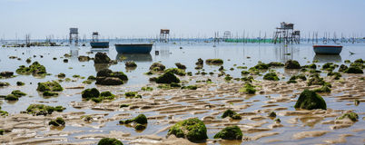 Beach and Clam farms Royalty Free Stock Image