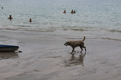 Beach Cleaner stock photo