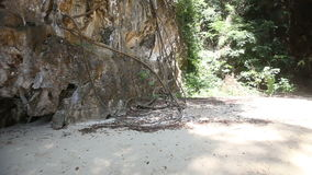 Beach among cliff trees with lianas stock video footage