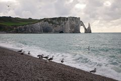 The beach and cliffs with seagulls of Etretat, Normandy on the French coast Stock Photography