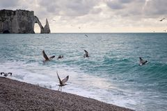 The beach and cliffs with seagulls of Etretat, Normandy on the French coast. The beach and cliffs of Etretat with a gloomy sky and sea gulls tourist destination Stock Photography