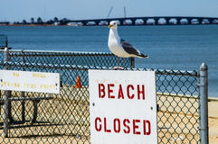 Beach Closed Sign Stock Photo
