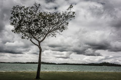 Beach clouds with tree. Tree in beach dark cloudy day Stock Photo