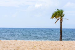 Beach Coast landscape with one single tropical palm sunny day Royalty Free Stock Photography