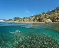 Beach coastline in Roses town and a gilt-head bream fish with seagrass underwater. Split view half above and below water surface, Spain, Costa Brava royalty free stock images
