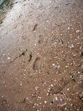 Beach cobble stone wet floor foor prints texture background. West mersea, essex, england, uk stock photos