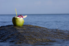 Beach and coconut Royalty Free Stock Photo