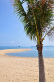 Beach and Coconut Stock Photography