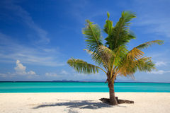 Beach and Coconut palm, Lipe island,Thailand Stock Photo