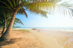 Beach with coconut palm and sea at sunset time Stock Images