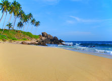 Beach with coconut palm trees Royalty Free Stock Photography