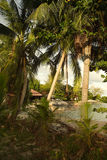 Beach and coconut palm trees in Thailand Stock Photos