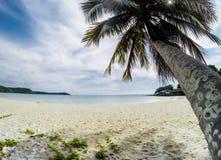 Beach coconut palm trees Stock Photography