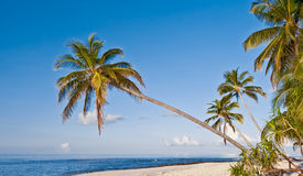 Beach with coconut palm on tropical island Stock Images