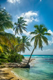 Beach with coconut palm,  uninhabited tropical island Stock Images