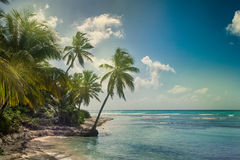 Beach with coconut palm,  uninhabited tropical island Royalty Free Stock Photos