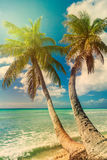Beach with coconut palm,  uninhabited tropical island Stock Image