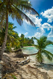 Beach with coconut palm,  uninhabited tropical island Stock Photography