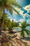 Beach with coconut palm,  uninhabited tropical island Stock Photo