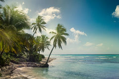 Beach with coconut palm,  uninhabited tropical island Royalty Free Stock Images