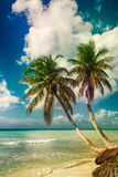 Beach with coconut palm,  uninhabited tropical island Royalty Free Stock Photography