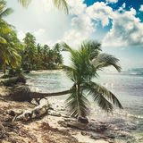 Beach with coconut palm,  uninhabited tropical island Royalty Free Stock Image