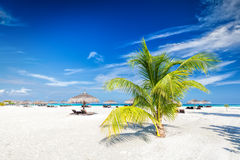 Beach with coconut palms and deckchairs on a small island resort in Maldives Stock Photos