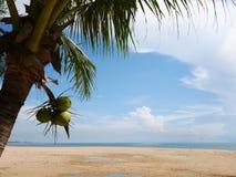 Beach coconut sea view. With blue sky Thailand Royalty Free Stock Photos