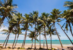 Beach with coconut tree Stock Image