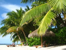 Beach And Coconut Trees. Tropical beach is under the palm and coconut trees Royalty Free Stock Photo